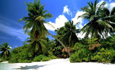 фото Мальдив на Coral Travel
